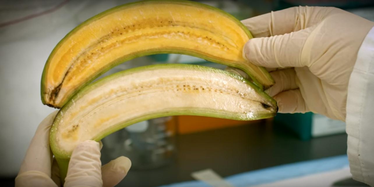 Golden Banana Pictures