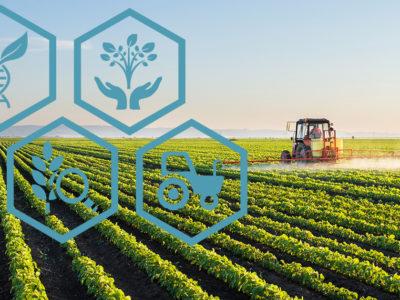 GM Soybean Field